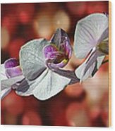 Orchid Flower Photographic Art Wood Print