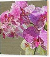 Orchid Flowers Art Prints Pink Orchids Wood Print
