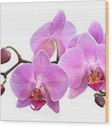 Orchid Flowers - Pink Wood Print