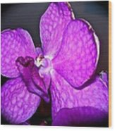 Orchid From Art Gallery Wood Print