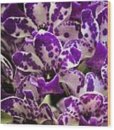 Orchid Grouping Wood Print