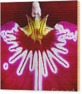 Orchid Harlequinn-pansy Orchid Wood Print