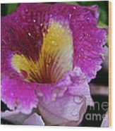 Orchid Heart And Soul Wood Print