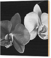 Orchid In Black And White Wood Print