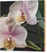 Orchid In Bloom Wood Print