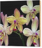 Orchid In Blossom Wood Print