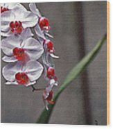 Orchid In Window Wood Print