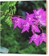 Orchid (laelia Gouldiana) Wood Print