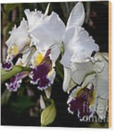 Orchid Laeliocattleya Lucie Hausermann With Buds 4074 Wood Print