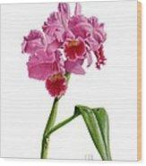 Orchid - Lc. Culminant La Tuilerie Wood Print