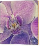 Orchid Lilac Dark Wood Print