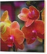 Orchid Melody Wood Print by Karen Wiles