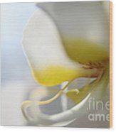Orchid Melody  Wood Print
