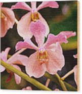 Orchid Number 17 Wood Print