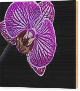 Orchid On Black Background Wood Print