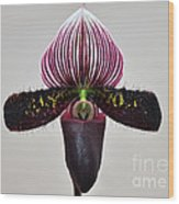Orchid Paphiopedilum Satchel Paige X Black Beauty Wood Print