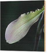 Orchid Petal Wood Print