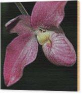 Orchid Phragmipedium Hanna Popow 2 Of 2 Wood Print