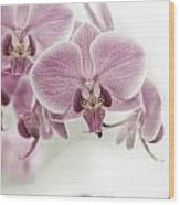 Orchid Pink Vintage Wood Print