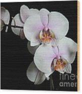 Orchid Portrait Wood Print