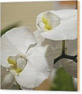 Orchid Purity Wood Print