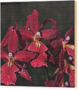 Orchid Red Burrageara Living Fire  Glowing Ember Wood Print