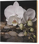 Orchid - Sensuous Virtue Wood Print by Tom Mc Nemar