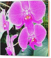 Orchid Series 1 Wood Print