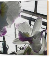 Orchid Series 4 Wood Print