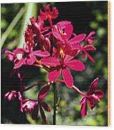 Orchid Study V Wood Print