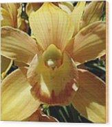 Orchid Sunshine Wood Print
