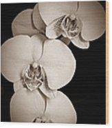Orchid Trio Sepia Wood Print