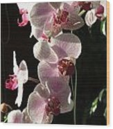Orchid Tropical Blooms Wood Print