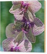 Orchid Two Wood Print