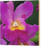 Orchid Variations 1 Wood Print by Rona Black