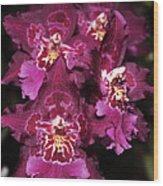 Orchid Vuylstekeara Aloha Passion Wood Print