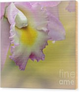 Orchid Whisper Wood Print