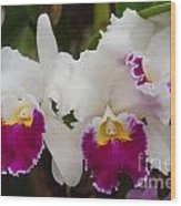 Orchids 198 Wood Print