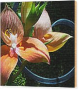 Orchids 5 Wood Print