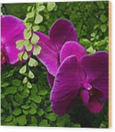 Orchids And Baby Tears Wood Print