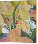 Orchids And Buds Wood Print by Robert Bray