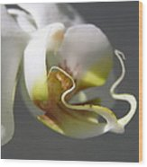 Orchid's Face Wood Print