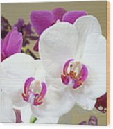 Orchids Floral Art Prints White Pink Orchid Flowers Wood Print