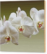 Orchids In Green Wood Print