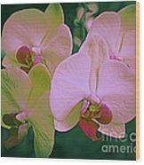 Orchids In Pink And Green Wood Print