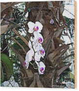 Orchids In The Opryland Hotel In Nashville Tennessee Wood Print