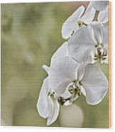 Orchids Wood Print by Karen Walzer