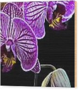 Orchids On Black Background Wood Print