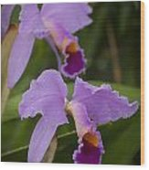 Orchids Pictures 1 Wood Print