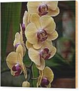 Orchids Pictures 10 Wood Print
